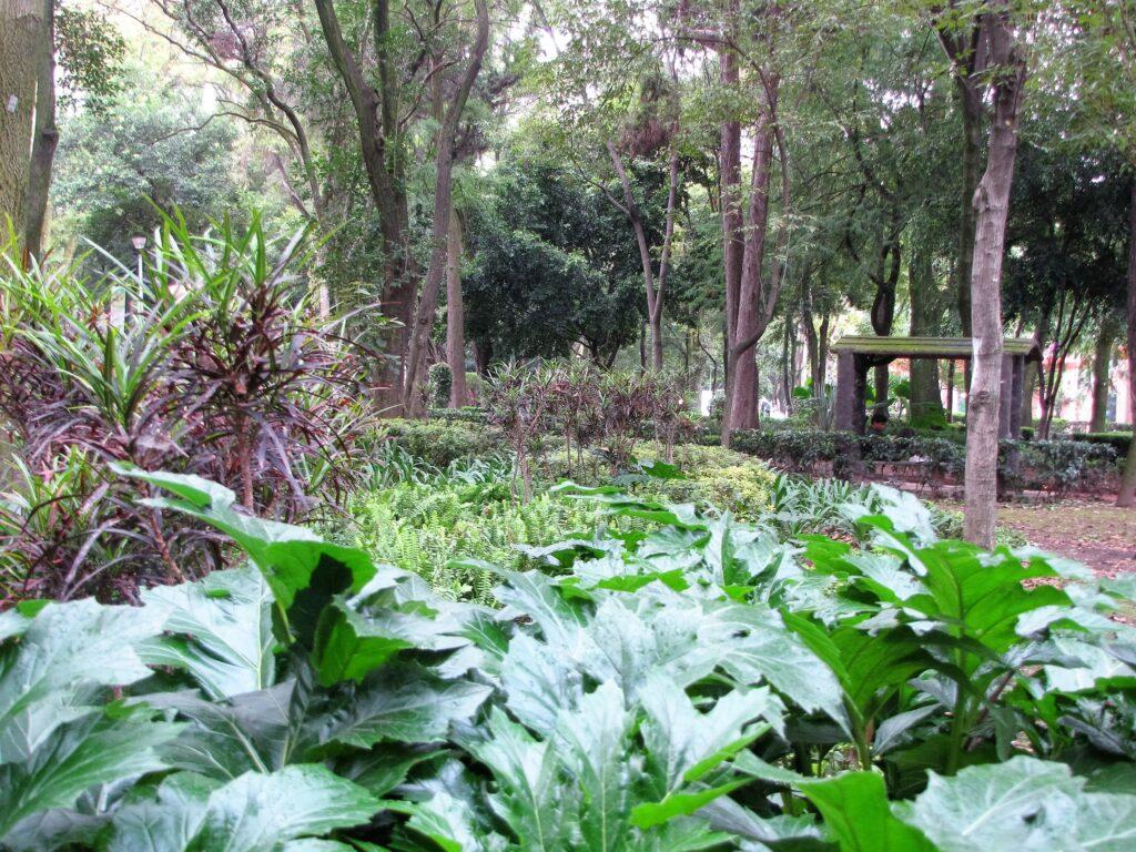 Vegetación_en_el_parque_España_en_la_Colonia_Condesa_México