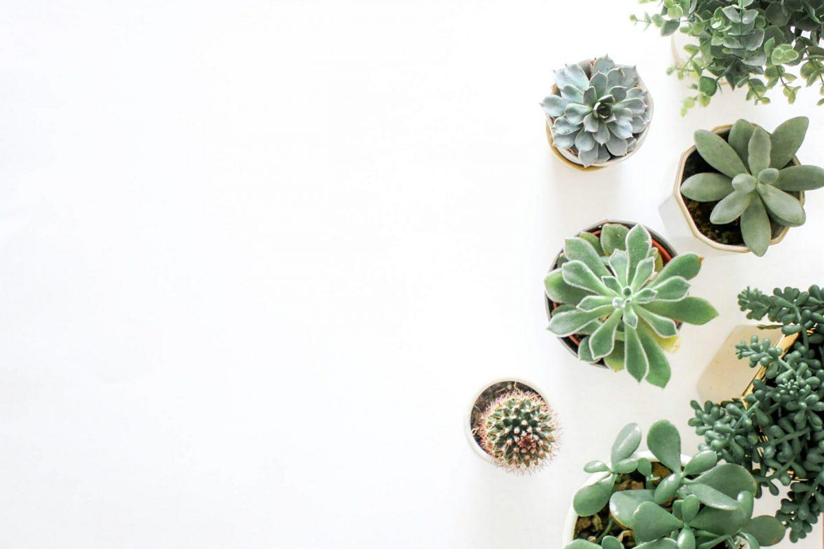 Plantas para tu cuarto